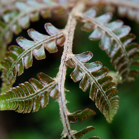 Fern Photography, Green Wall Decor, Nature Photo