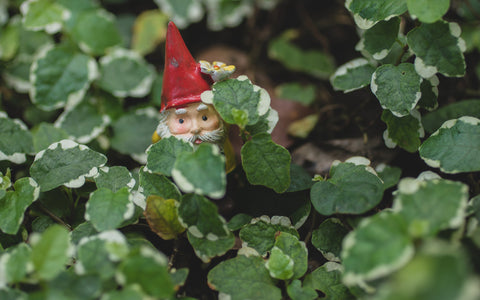 Garden Gnome Photography