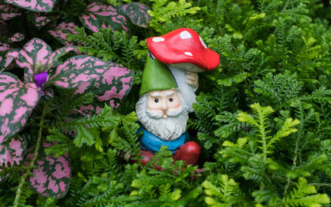 Whimsical Garden Gnome Fine Art Print - april bern photography