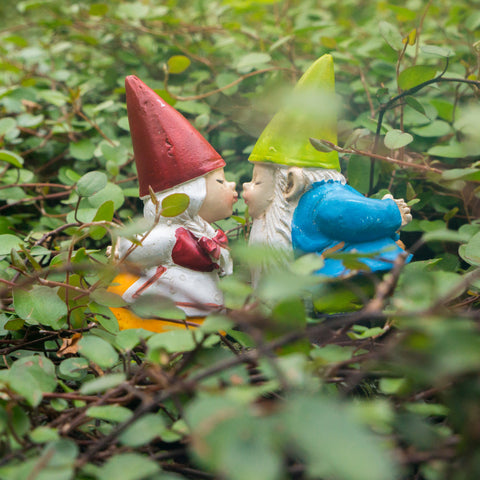 Valentines Day Kissing Garden Gnome Blank Greeting Card - april bern photography