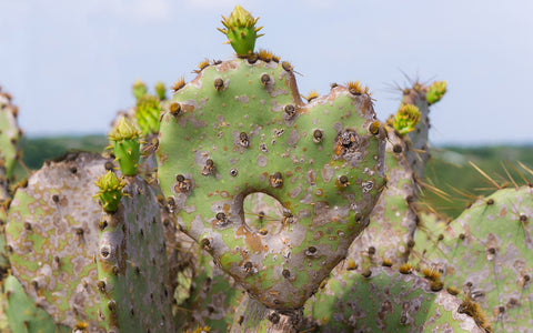 Cactus Heart Fine Art Print, Southwesten Desert Photo - april bern photography