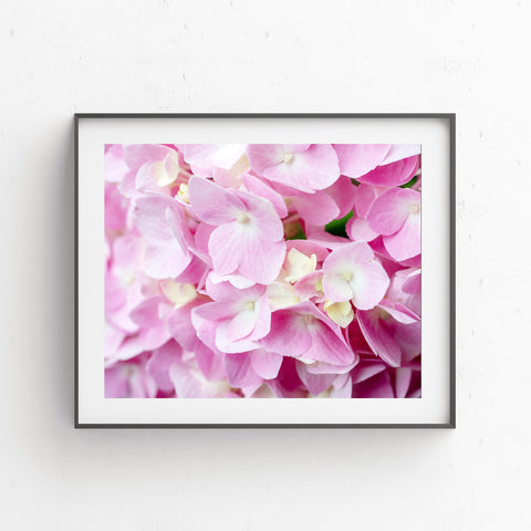 Printable Pink Hydrangea Wall Art - Instant Download - april bern photography