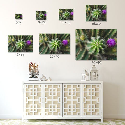 Cactus Wall Art - Ready to Hang Gallery Wrapped Canvas - april bern photography