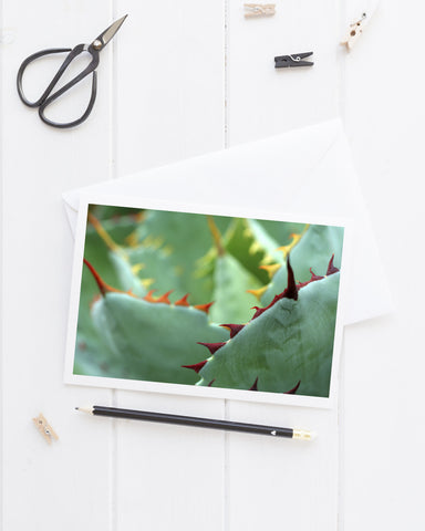 Abstract Agave Card, Succulent Photo Notecard