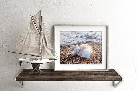 Seashell Art Print - Beach Home Decor - april bern photography