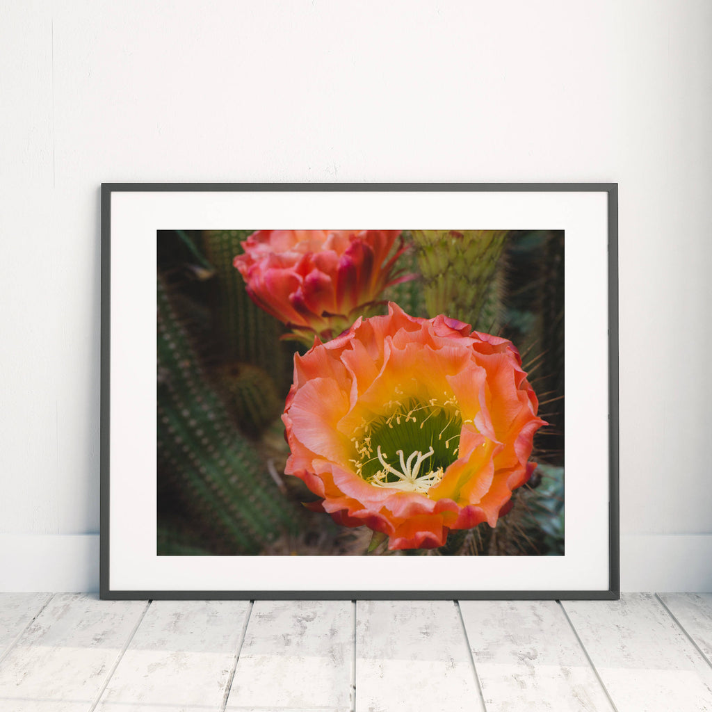 Cactus Blooms Art Print - Desert Art - april bern photography