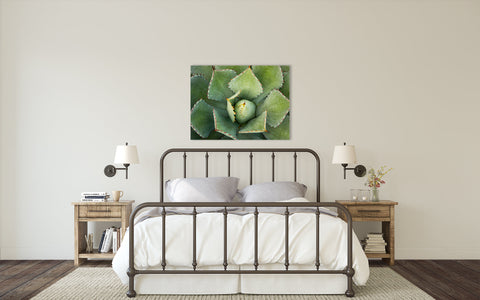 Agave Wall Art - Ready to Hang Gallery Wrapped Canvas - april bern photography