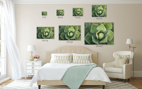 Agave Wall Art - Ready to Hang Gallery Wrapped Canvas - april bern art & photography