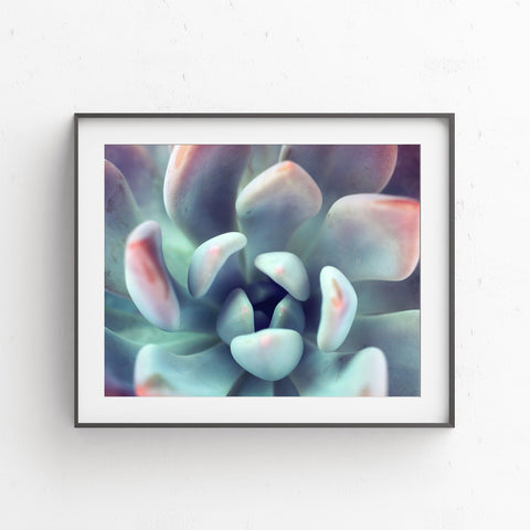 Instant Download - Succulent Printable Art - april bern photography