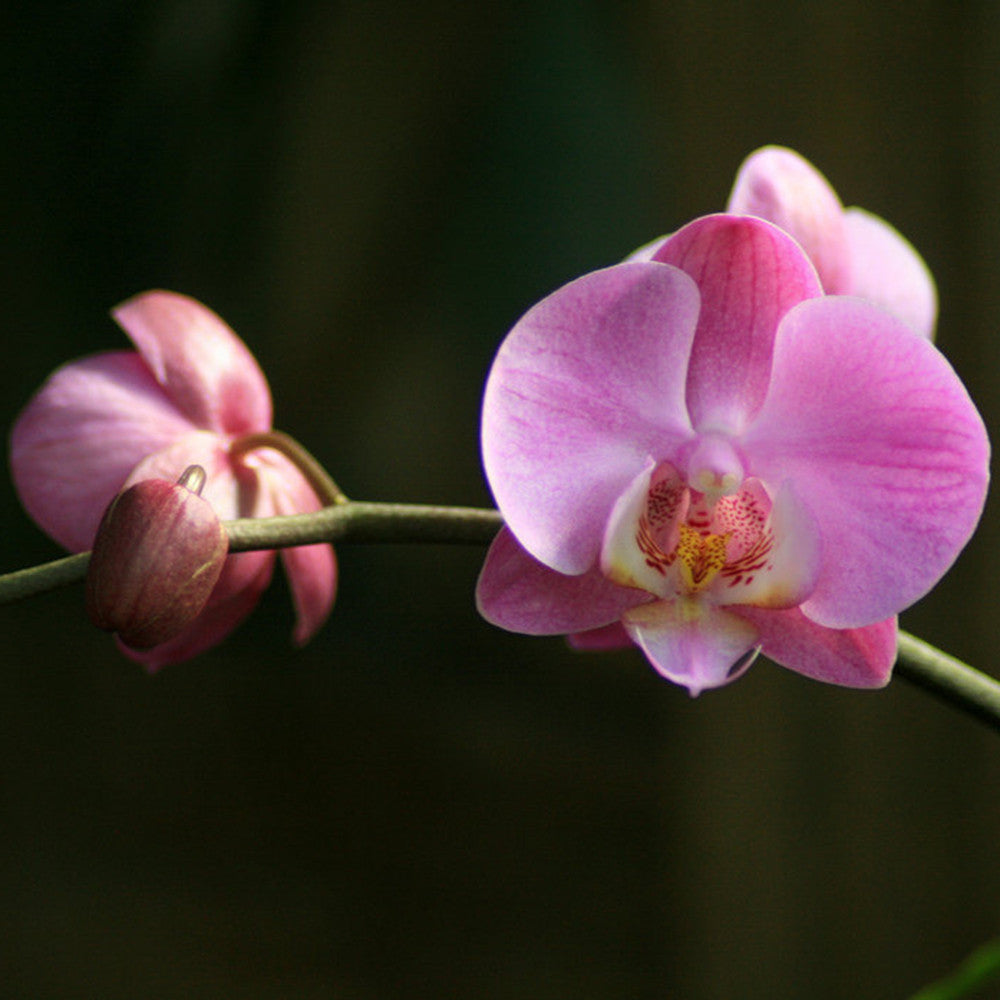 Orchid Branch Fine Art Photography April Bern Photography