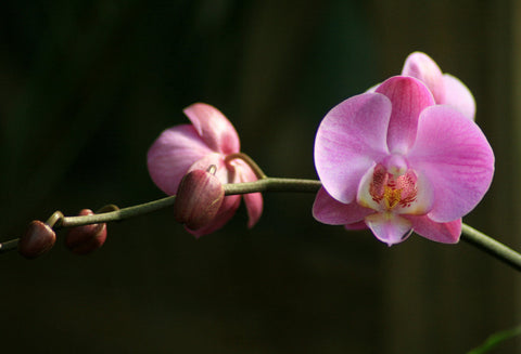 Orchid Branch Fine Art Photography - april bern photography