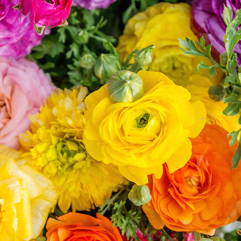 Ranunculus Fine Art Photography - april bern photography