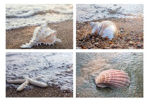 Seashells by the Seashore - Set of 4 Shell Prints - april bern photography
