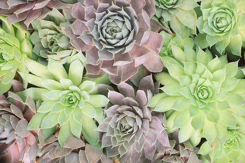 Assorted Succulent Notecards-Set of 5 Any Occasion Succulent Greeting Cards - april bern art & photography