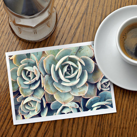 Assorted Succulent Notecards-Set of 5 Any Occasion Succulent Greeting Cards