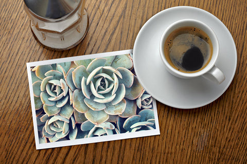 Assorted Succulent Notecards-Set of 5 Any Occasion Succulent Greeting Cards - april bern photography