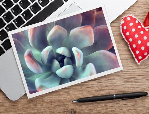 Succulent Notecard, Blank Greeting Card - april bern photography