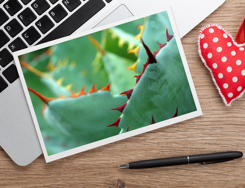 Abstract Agave Card, Succulent Photo Notecard - april bern art & photography