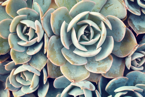 Succulent Card, Blank Notecard Card - april bern photography