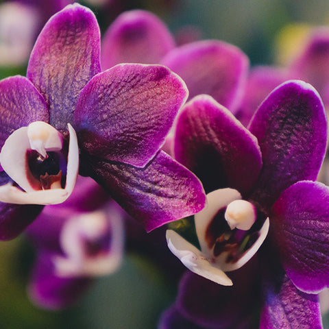 Orchid Fine Art Photography