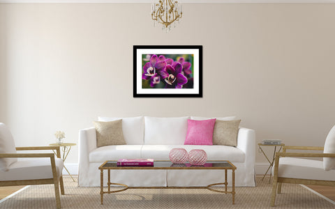 Orchid Collection no.6 Fine Art Photography - april bern photography