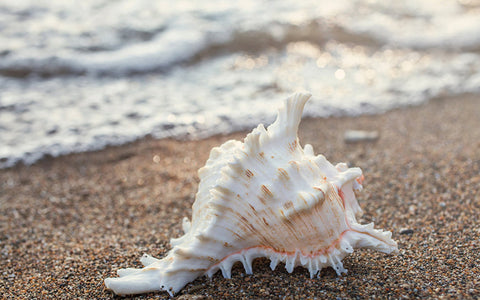 Seashell Photo Notecard - Blank Seashell Card - april bern art & photography