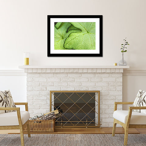 Tropical Green Leaf Botanical Art - april bern photography