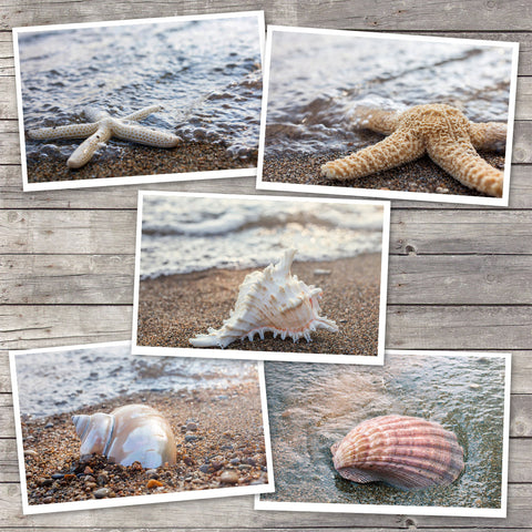 Assorted Seashell Cards-Set of 5 Photo Notecard, Blank Greeting Cards