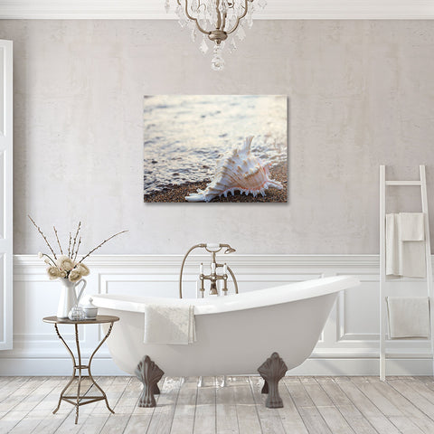 Seashell Gallery Wrapped Canvas - Ready to Hang Canvas Art