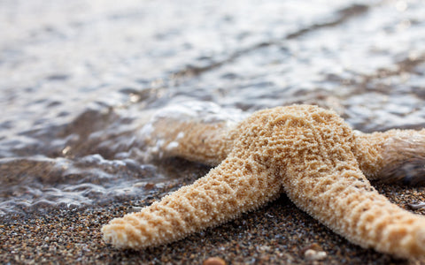 Blank Starfish Seashell Note Card