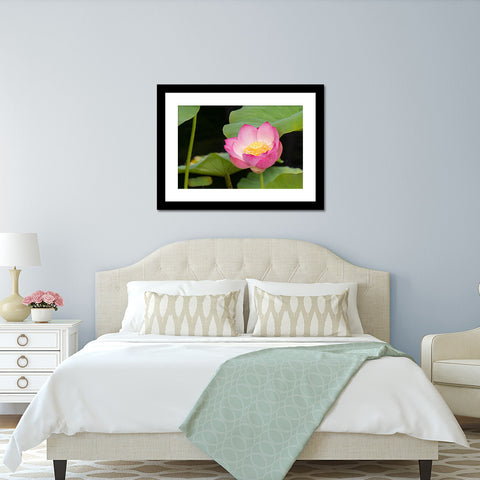 Lotus Blossom Photo - Lotus Art Print
