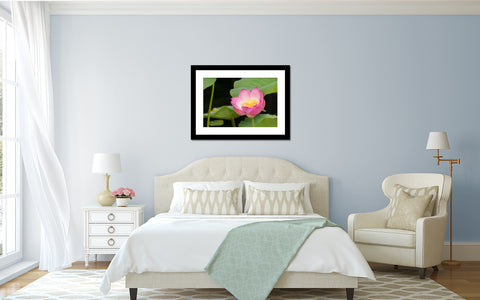 Lotus Blossom Photo - Lotus Art Print - april bern photography