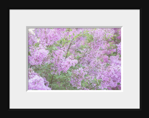Dreamy Lilac Fine Art Photography - april bern photography