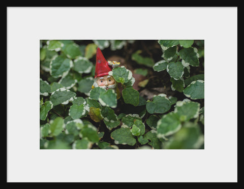 Garden Gnome Fine Art Print - Hide and Seek - april bern photography