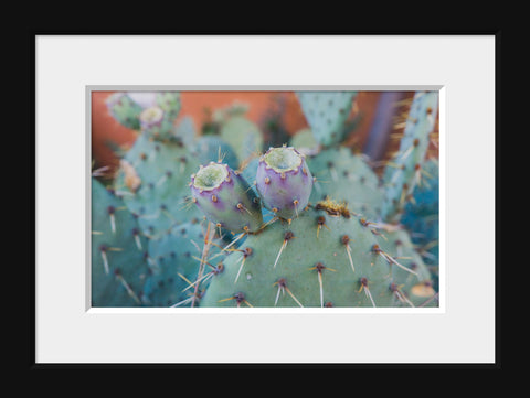 Santa Fe Prickly Pear Cactus - Southwest Desert Photo - april bern photography