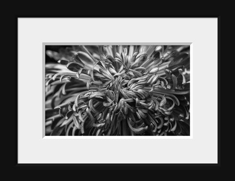 Black & White Botanical Print - april bern photography