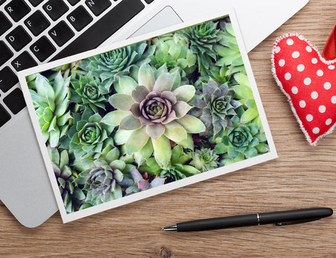 Succulent Card, Any Occasion Card - april bern photography