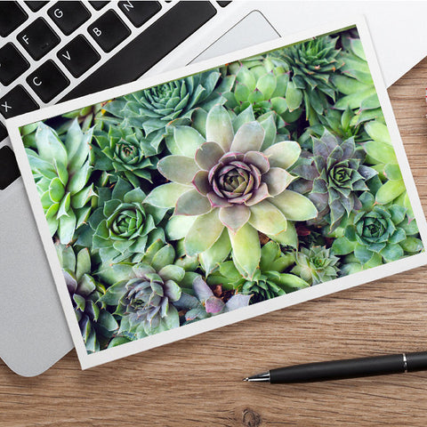 Succulent Card, Any Occasion Card