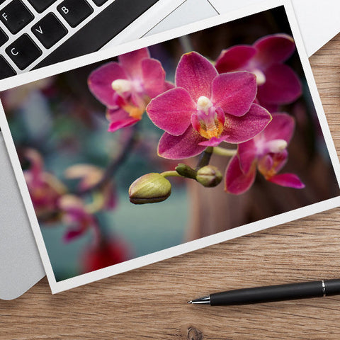 Orchid Photo Notecard, Blank Floral Greeting Card - april bern photography