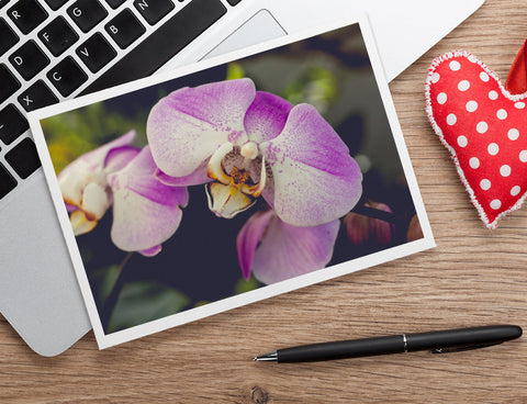 Orchid Stationary, Blank Greeting Card - april bern photography