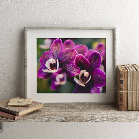 Orchid Collection no.6 Fine Art Photography