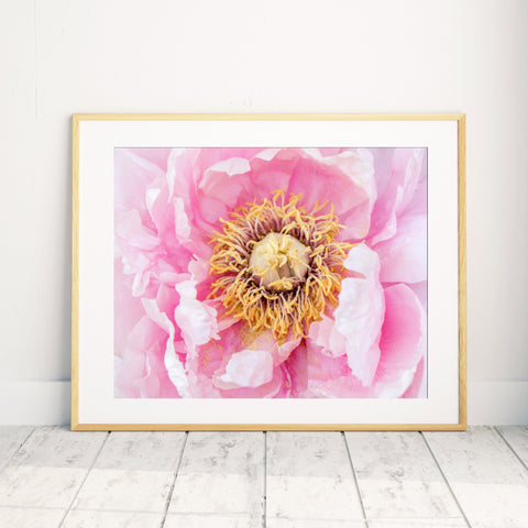 Peony Art Print - Peony Home Decor - april bern photography