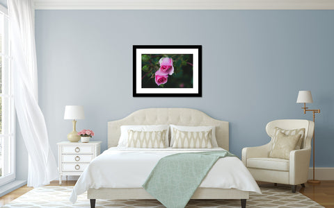 Rose Art Print - Pink Rose Photography - april bern photography