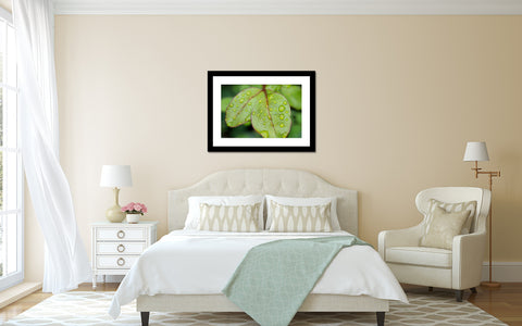 Leaf with Raindrops, Botanical Art Print - april bern art & photography