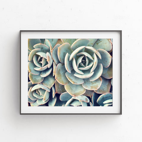 Printable Art - Succulent Instant Download - april bern photography