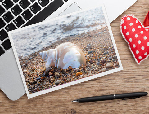Seashell Notecard - Blank Seashell Photo Card - april bern photography