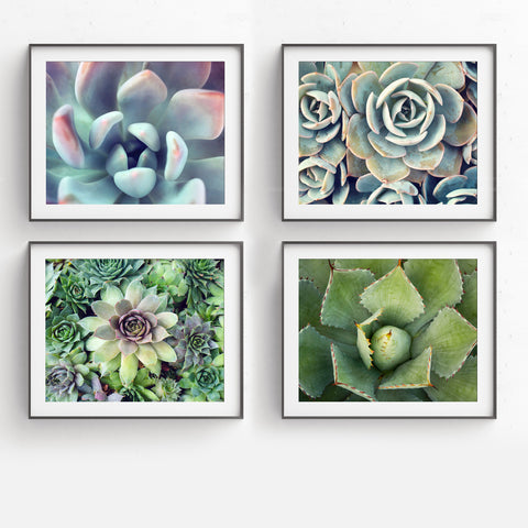 Succulent Garden -  Set of 4 Succulent Art Prints