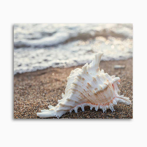 Seashell Gallery Wrapped Canvas - Ready to Hang Canvas Art - april bern photography