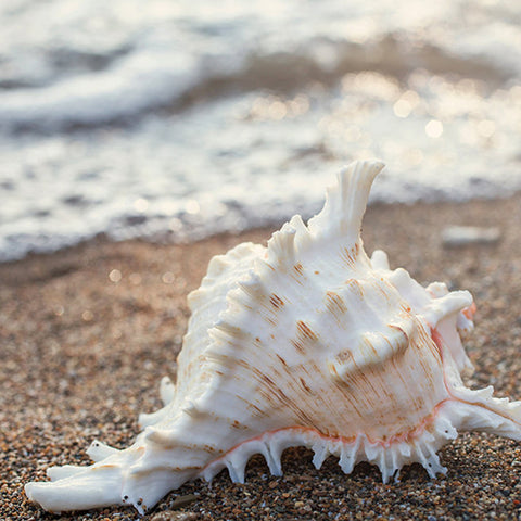 Seashell Number 2 - Fine Art Beach and Ocean Photography. - april bern photography