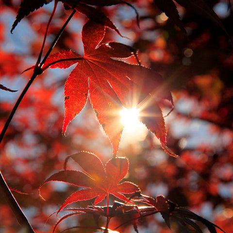 Autumn Light- Fall Fine Art Nature Photography - april bern photography